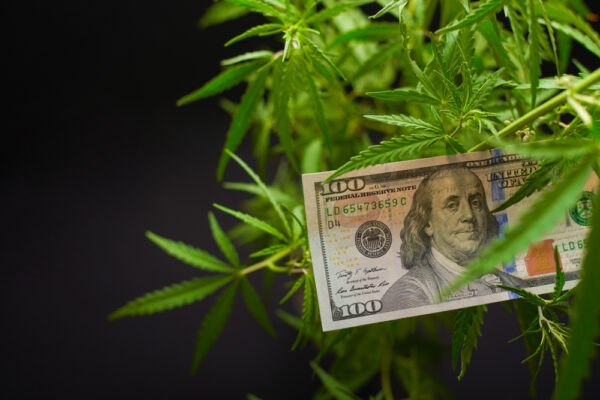 The Cannabis Investor
