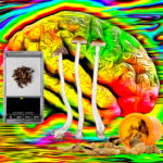 Psilocybin Magic Mushroom Dispensaries Could Become a Reality in North America