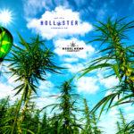 Hollister Biosciences' Rebel Hemp to Launch Line of Premium Hemp Pre-Rolls + HOLL Stock Chart Review