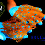 Hollister Biosciences to Acquire Premier Cannabis Extract Brand Venom Extracts