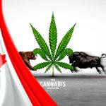 Cannabis Earnings Roundup: Financials From the Big 4 Canadian LPs, Do the Recent Quarterly Results Justify the Lofty Share Prices?
